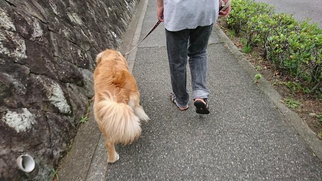 ぱぱと散歩