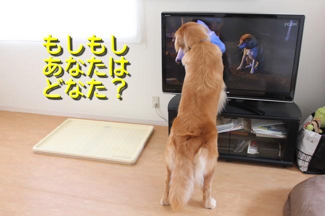 ひまわり映画3