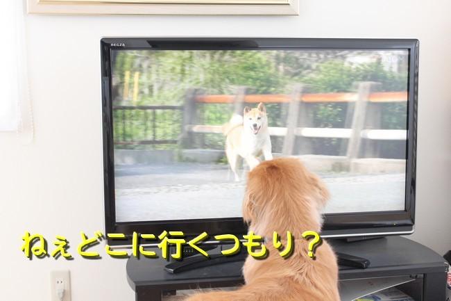 ひまわり映画4