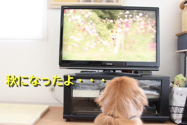 ひまわり映画5