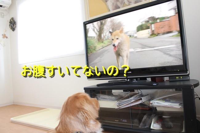 ひまわり映画6