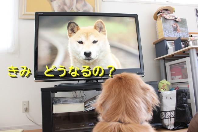 ひまわり映画7