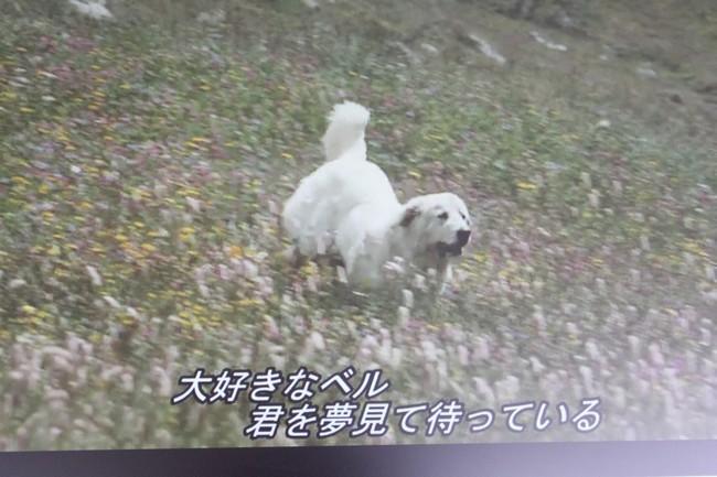 IMG_3285走るベル