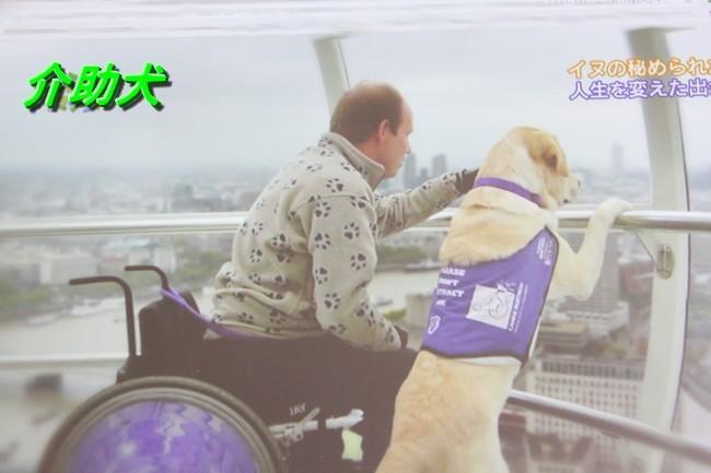IMG_3301介護犬