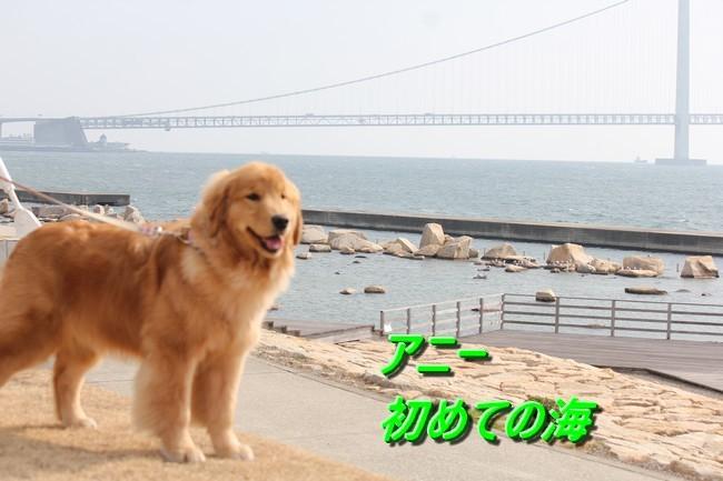IMG_7674大蔵海岸アニー