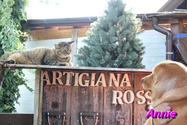 アルティジャーナ猫