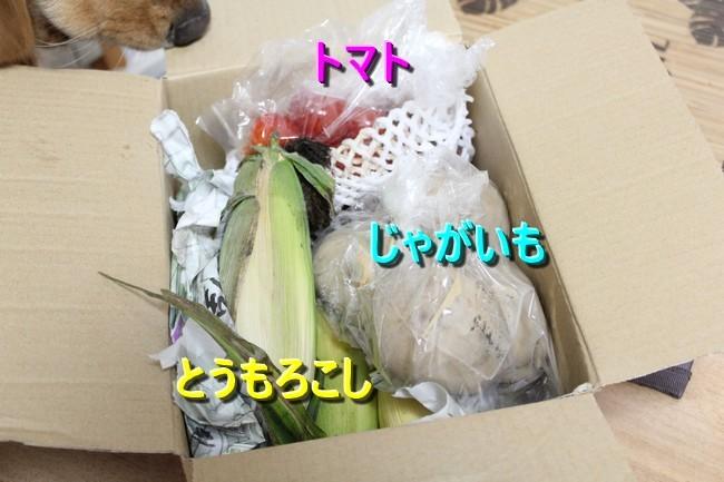 お里からの野菜