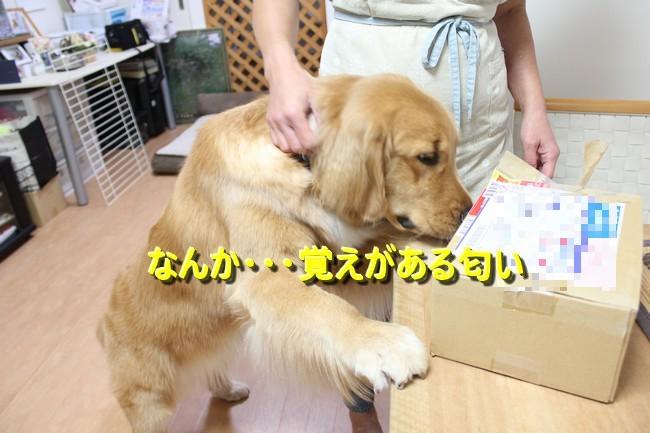 IMG_4775ゆうパック4