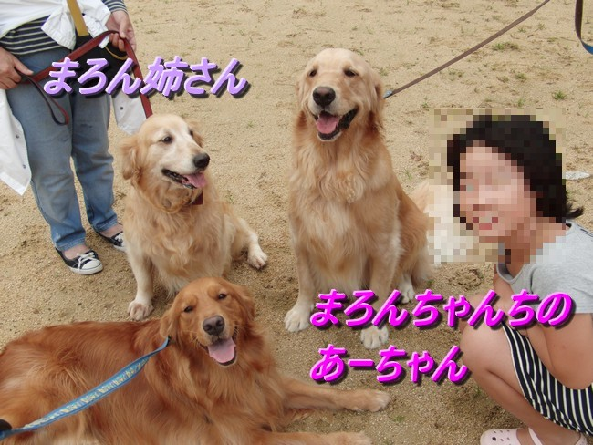 あみちゃんと3頭