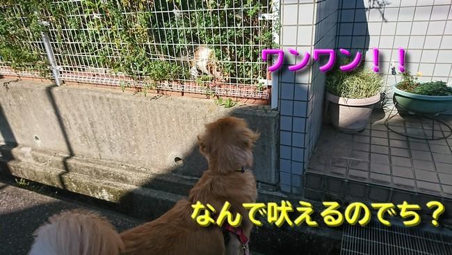 059 姉キミ