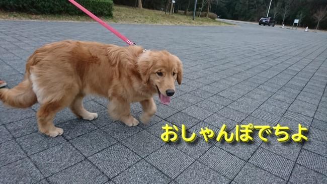 アニー初散歩