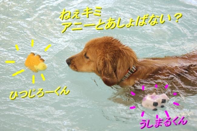 IMG_3947ソルファちゃんおもちゃ