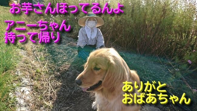 033おばあちゃんとアニー畑1