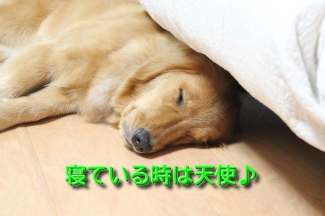 IMG_1679寝ているアニー
