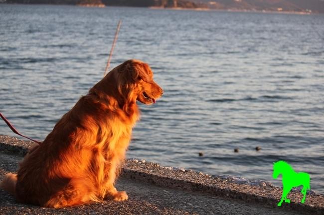 浜名湖 Dec 2011 005