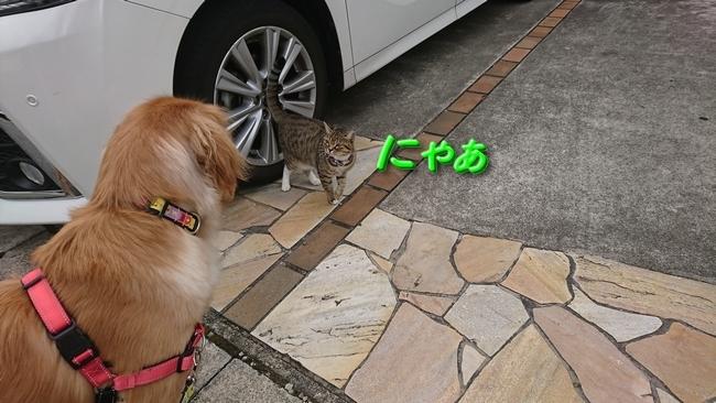 001ご近所猫1