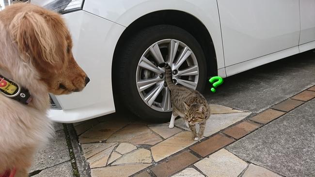 003ご近所猫3