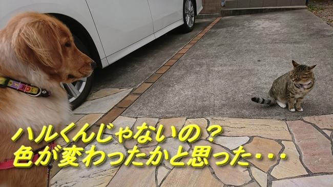 006ご近所猫6