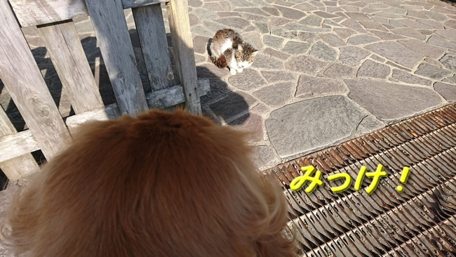 087県道下子猫1