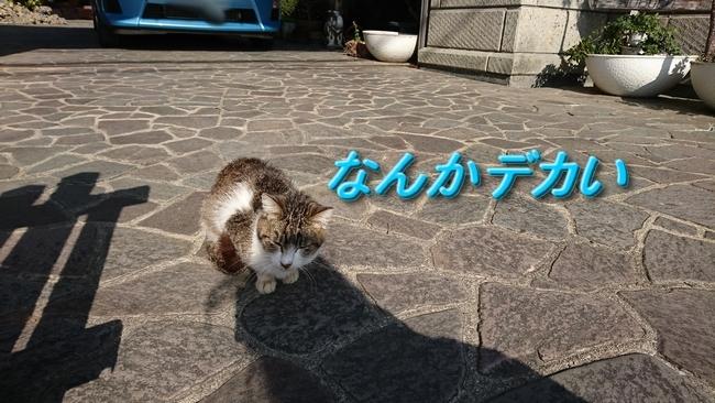 089子猫