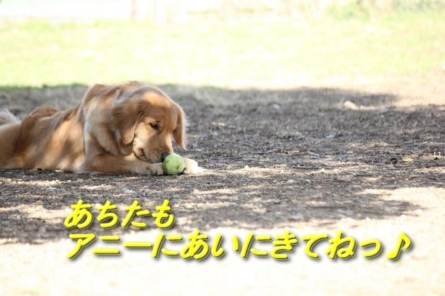 IMG_454ブログラスト