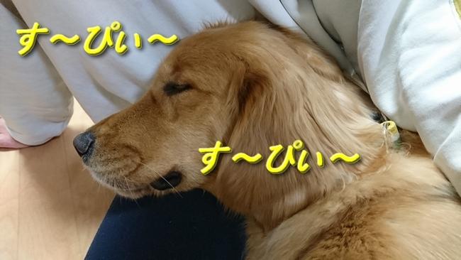 寝息を立てるアニー