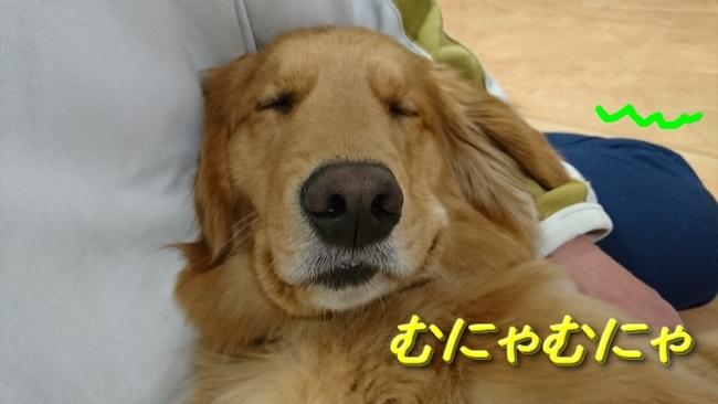眠るアニー