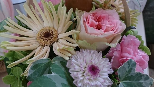 0249月の花アップ