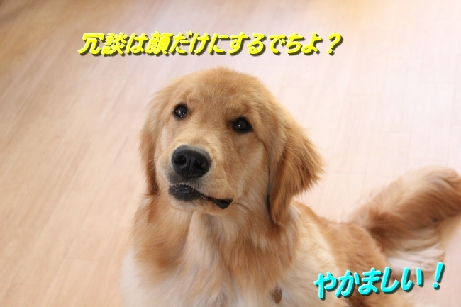 IMG_00390.jpg