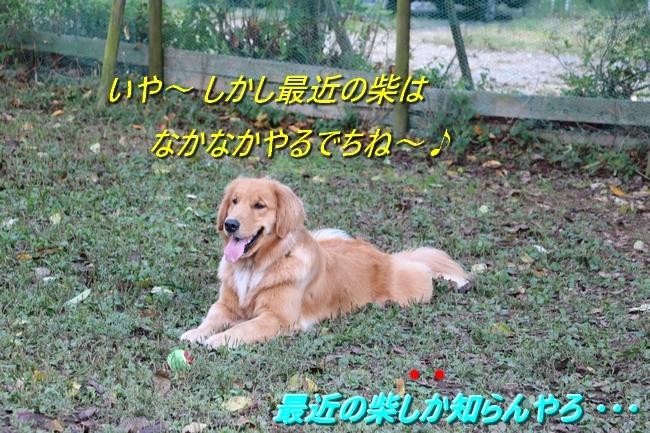 IMG_1008.jpg