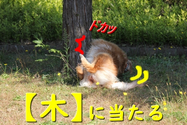 IMG_1298.jpg