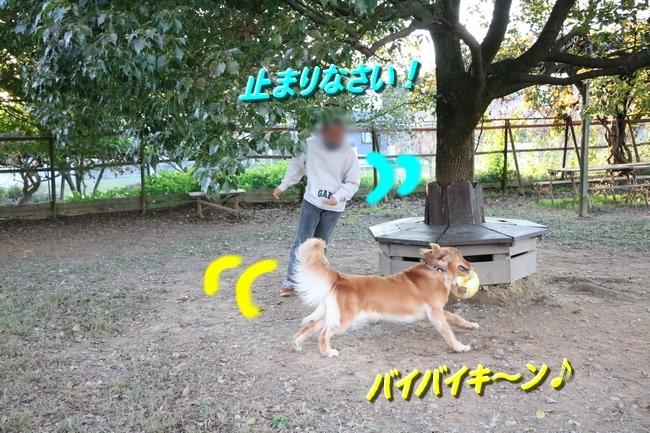 IMG_1528112.jpg