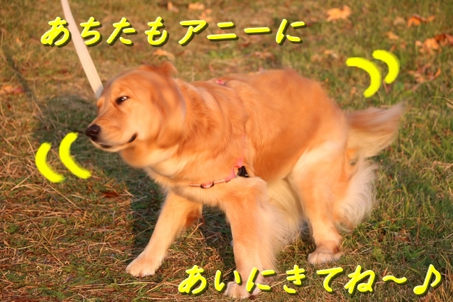 IMG_18391224.jpg