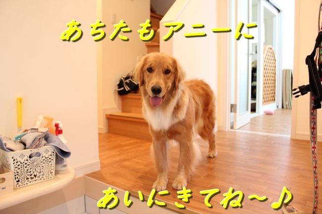 IMG_2335111.jpg