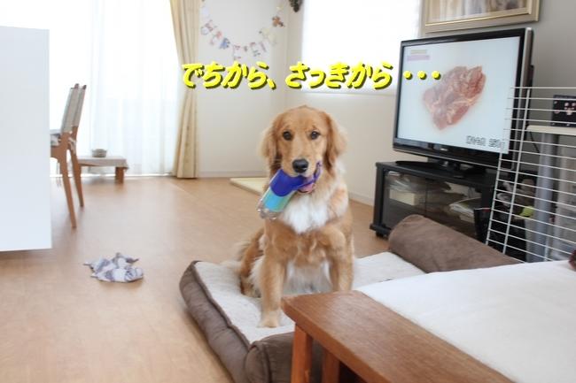 IMG_2830.jpg