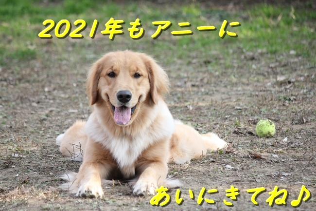 IMG_28431231.jpg