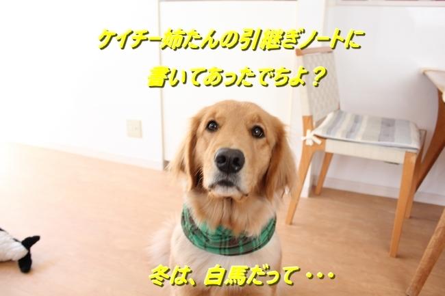 IMG_29471218.jpg