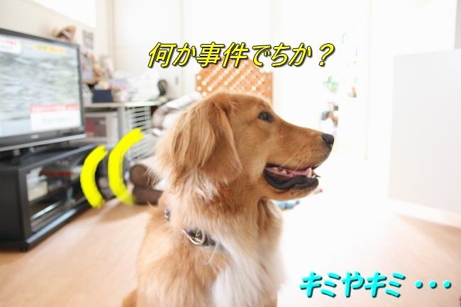 IMG_2989.jpg