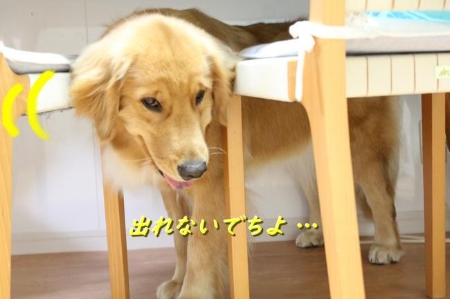IMG_3483.jpg