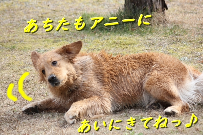 IMG_38990111.jpg