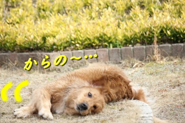 IMG_40370111.jpg