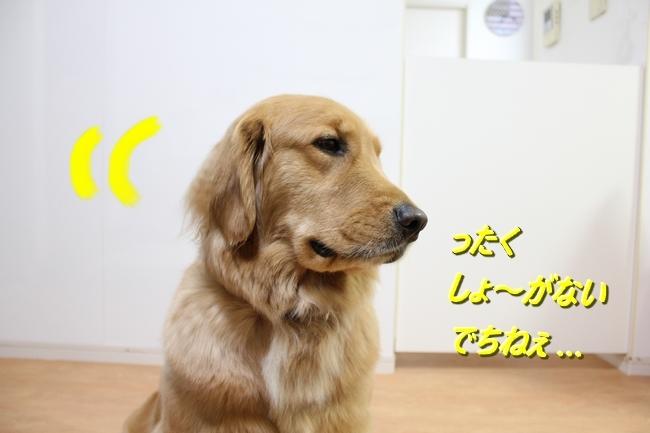 IMG_43620126.jpg