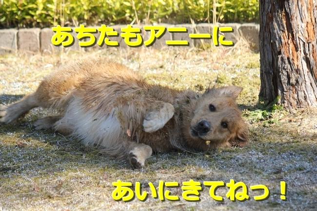IMG_44610205.jpg