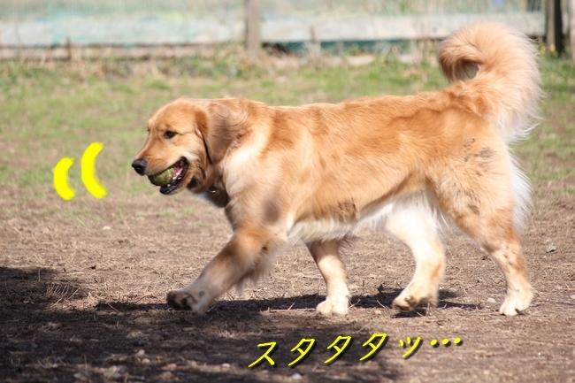 IMG_45710129.jpg