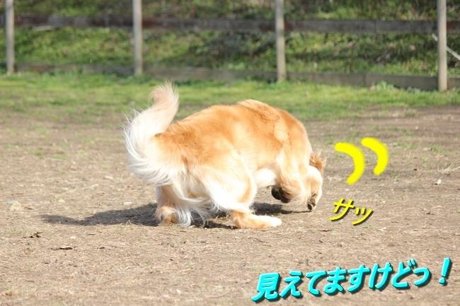 IMG_45900129.jpg