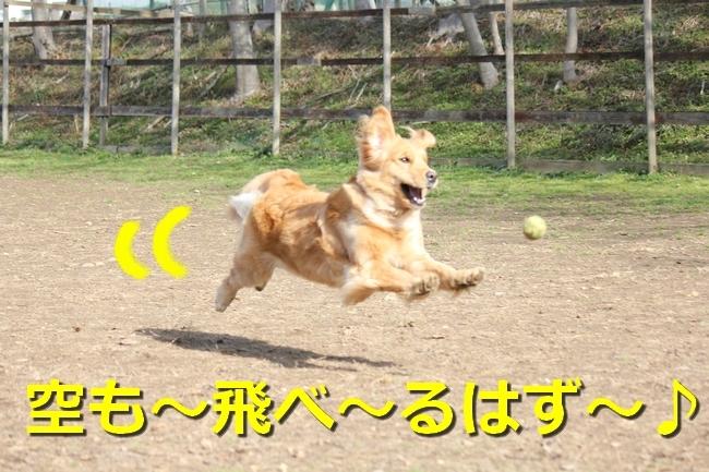 IMG_45970128.jpg