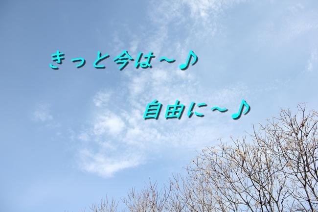 IMG_46060128.jpg