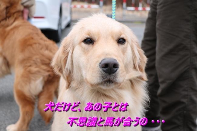 IMG_6466101.jpg