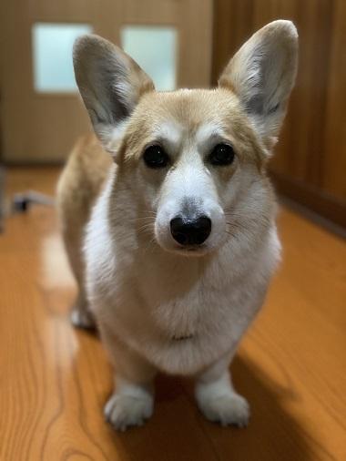 15じぃちゃん