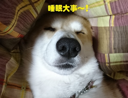 32睡眠大事
